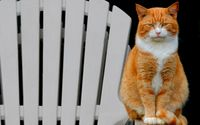 Bored orange cat on the chair wallpaper 1920x1200 jpg