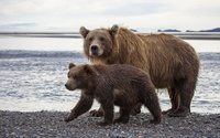 Brown bear with a cub [3] wallpaper 1920x1200 jpg