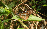 Brown butterfly wallpaper 2880x1800 jpg