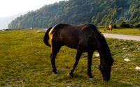 Brown horse grazing wallpaper 3840x2160 jpg