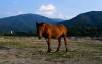 Brown horse on the pasture wallpaper 3840x2160 jpg