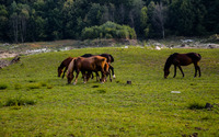 Brown horses grazing on the meadow wallpaper 1920x1200 jpg