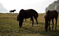 Brown horses on the meadow wallpaper 3840x2160 jpg