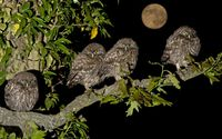 Burrowing Owlets in the night wallpaper 1920x1200 jpg