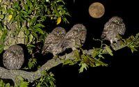 Burrowing Owlets in the night wallpaper 1920x1200 jpg