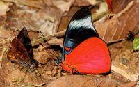Butteflies wallpaper 1920x1200 jpg