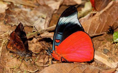 Butteflies wallpaper