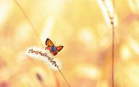 Butterfly [23] wallpaper 1920x1200 jpg