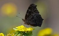Butterfly [15] wallpaper 2560x1600 jpg
