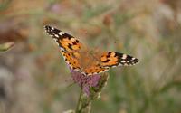 Butterfly [20] wallpaper 2560x1600 jpg