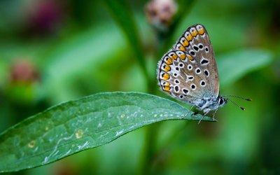 Butterfly on a leaf wallpaper