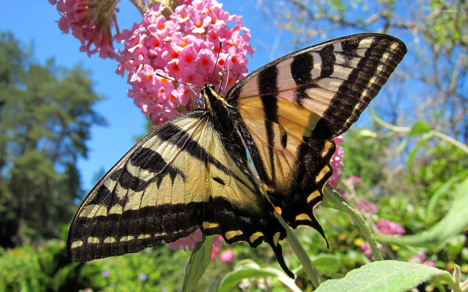Butterfly on the pink flower wallpaper - Animal wallpapers ...
