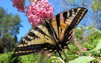 Butterfly on the pink flower wallpaper 1920x1200 jpg