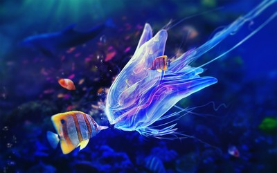 Butterflyfish and jellyfish wallpaper