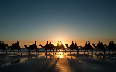 Camel caravan at sunset wallpaper