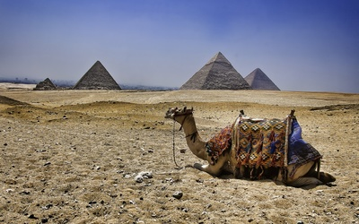 Camel resting on the sand near the pyramids wallpaper