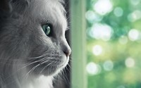 Cat [6] wallpaper 1920x1200 jpg