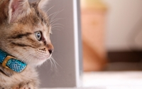 Cat [23] wallpaper 1920x1080 jpg