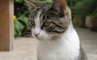 Cat [24] wallpaper 1920x1200 jpg