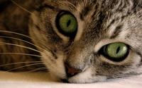 Cat wallpaper 1920x1200 jpg