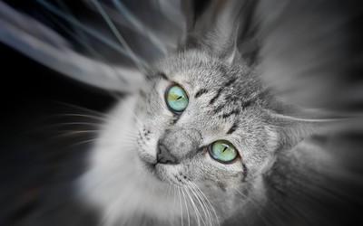 Cat [14] wallpaper
