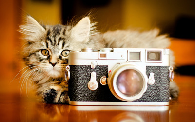 Cat and a camera wallpaper