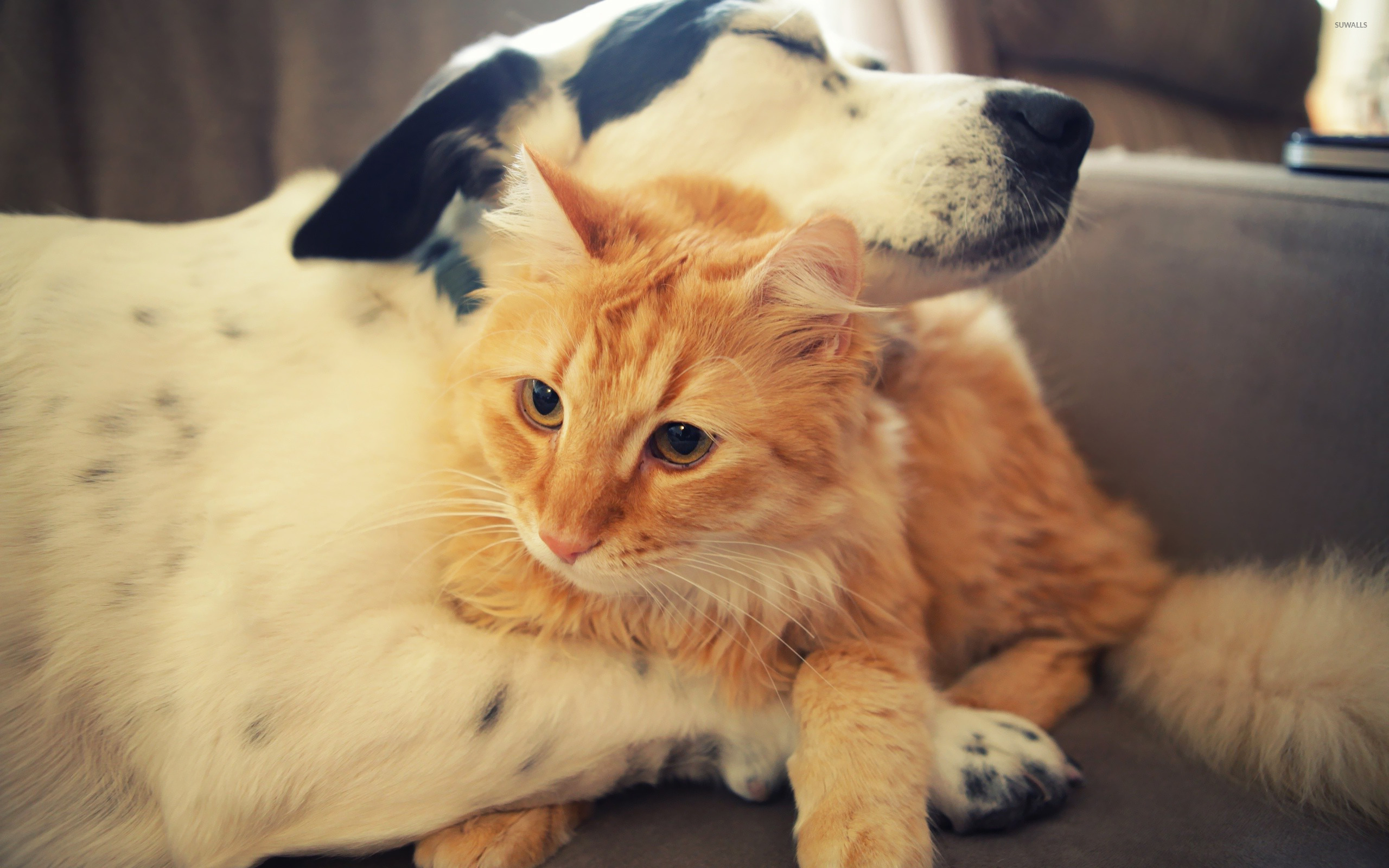 cat and dog love wallpaper - Animal wallpapers - #18262