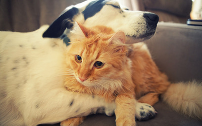 Cat and dog love wallpaper