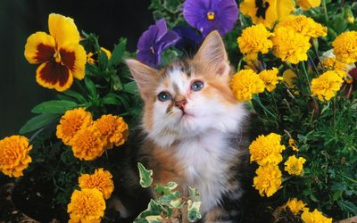 Cat between flowers wallpaper