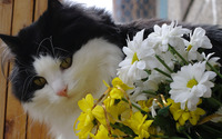 Cat by a bouquet wallpaper 2560x1600 jpg