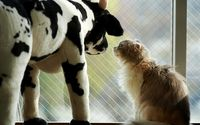 Cat gazing at a toy cow wallpaper 1920x1200 jpg