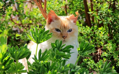 Cat hiding in green bushes Wallpaper