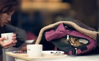 Cat in a bag wallpaper 1920x1200 jpg