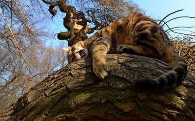 Cat in a tree wallpaper
