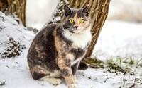 Cat in snow wallpaper 1920x1200 jpg