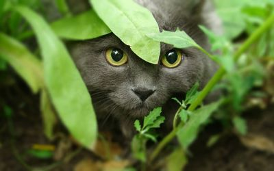 Cat in the bushes wallpaper