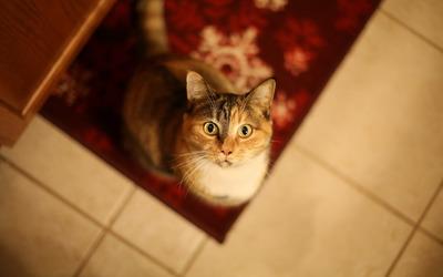 Cat looking up wallpaper