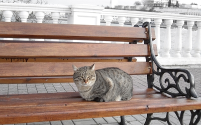 Cat on a bench wallpaper