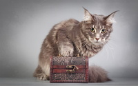 Cat on a box wallpaper 2560x1600 jpg