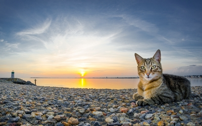Cat on a rocky sunset beach wallpaper