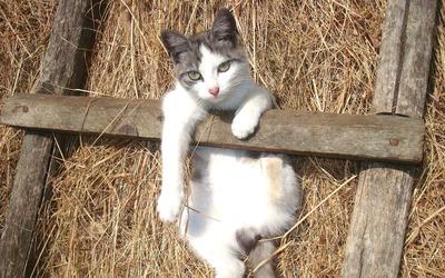 Cat on ladder wallpaper