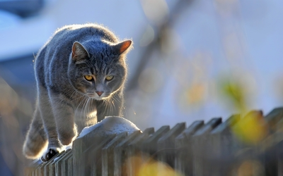 Cat on the fence wallpaper