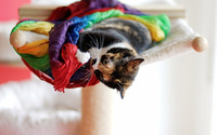 Cat playing with scarves wallpaper 1920x1200 jpg
