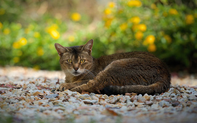 Cat resting [2] wallpaper