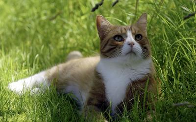 Cat sitting in the grass wallpaper