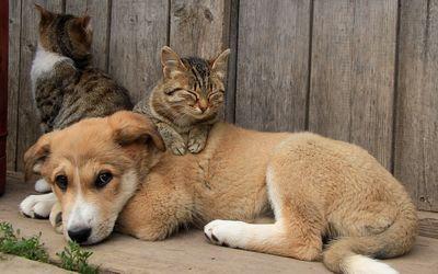 Cat sleeping on a puppy wallpaper