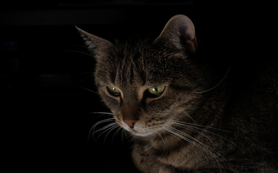 Cat staring [2] wallpaper