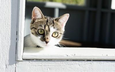 Cat waiting wallpaper