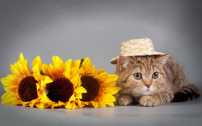 Cat with a straw hat wallpaper