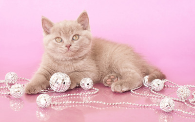 Cat with necklace wallpaper